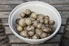 Harvesting New Potatoes - 5 July 2014 : Cropping new potatoes in 2014 in a potato barrel.