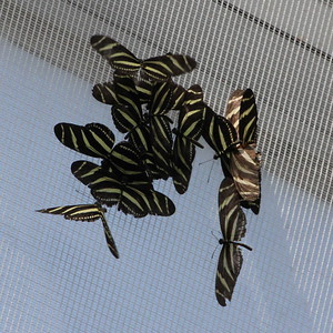 Niagara Butterfly Conservatory 18 September 2015