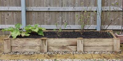 Rhubarb, Raspberry and Blackcurrants in raised bed