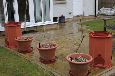 Patio fruit trees (and potato planters)