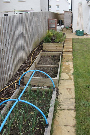 Looking along the raised beds