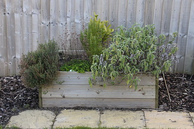 Herb Bed before