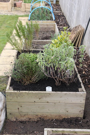 Replanted herb bed